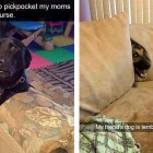 Snapchat Saturday:  Super Funny Pet Photos to Get You Laughing Again