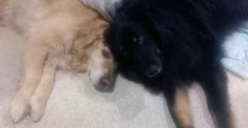 Family Adopts Senior Dog Who Surprises Everyone With Longevity