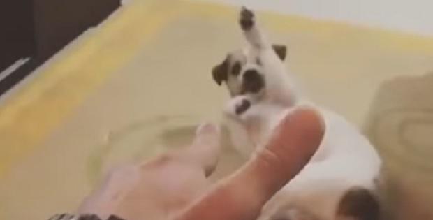 Dog Films Most Convincing Death Scene Ever!