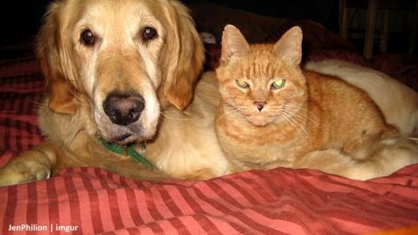11-16-16-forsbergs-best-kitty-friend0