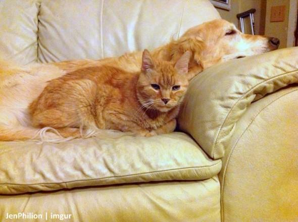 11-16-16-forsbergs-best-kitty-friend1