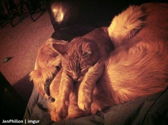 11-16-16-forsbergs-best-kitty-friend2