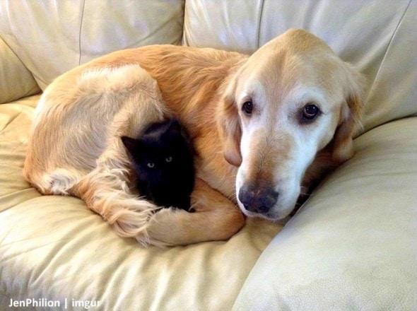 11-16-16-forsbergs-best-kitty-friend3