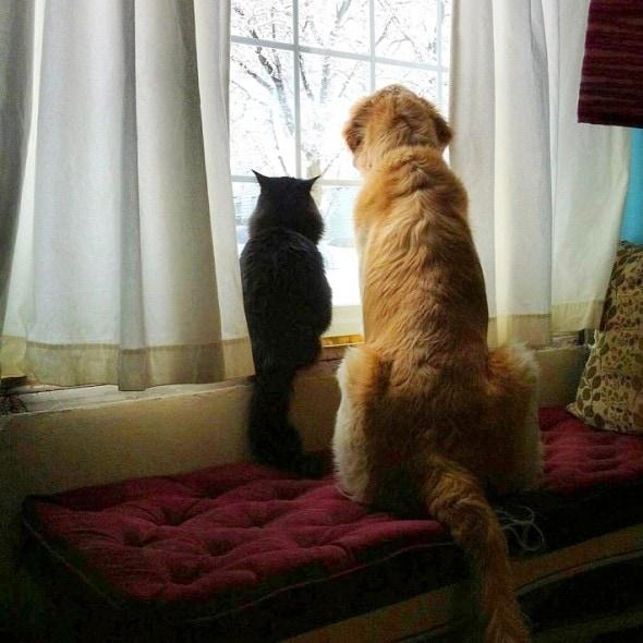 11-16-16-forsbergs-best-kitty-friend6