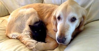 Mom Surprises Grieving Dog With a New Kitty