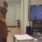 Dog is a REALLY BIG Fan of the Opening Theme for Star Wars