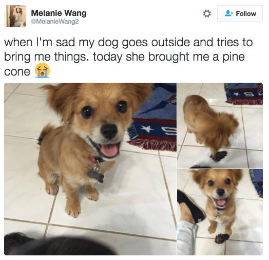 Bad Dog Bulldog Watching Tv