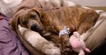 Penn Vet Program Saves 100th Shelter Dog in Need