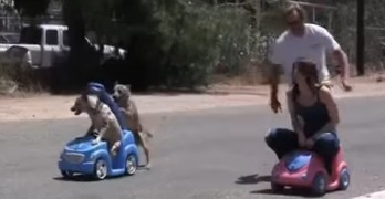 Dog Pushes Dog in Cart Race Against Humans and Totally Wins!