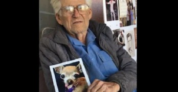 The Hunt Is on for a Dog Stolen from a World War II Vet