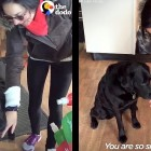 Clever Pet Store Dog Takes Customers by the Hand to Get Her Treats