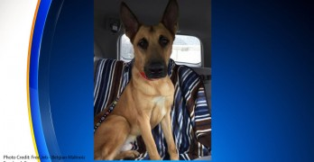 Dog Wins Release From Death Row Thanks to DNA Results