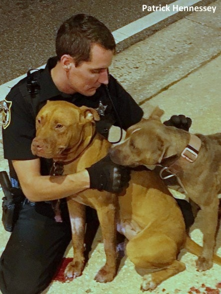 11-2-16-police-officer-snuggles-with-injured-pit-bulls4