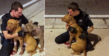 Police Officer Snuggles With Injured, Abandoned Pit Bulls on the Street Until Help Arrives