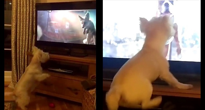 Dogs Are Going Bonkers for This Christmas Commercial