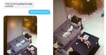 You Won't Believe What Mom Catches Naughty Dogs Up To While at Work!