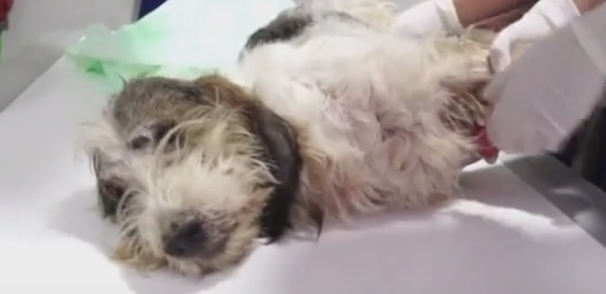 Buddy's Amazing Recovery After Being Thrown From a Moving Car