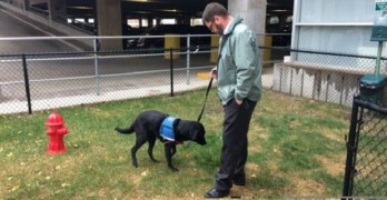 Des Moines Airport Gets OK on Indoor Doggy Bathroom