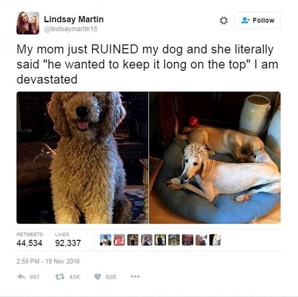 11-22-16-mom-ruins-dog-with-beyonce-perm-haircut0