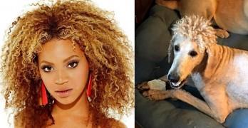 "Mom ""Ruins"" Dog by Getting Him Beyoncé Perm Haircut"