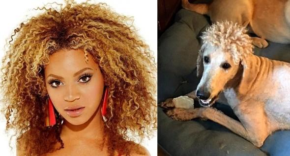 11-22-16-mom-ruins-dog-with-beyonce-perm-haircut3
