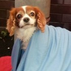 Lonely Little Dog Waits Outside of UK ER for Owner Who Fell Ill