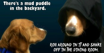 "There's a Little Bit of ""Dark Side Dog"" in EVERY Dog – Even Your Perfect Puppins!"
