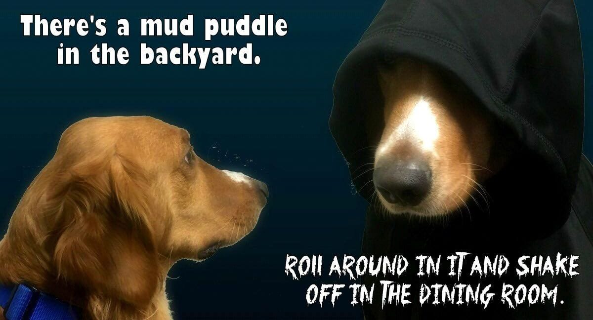 """There's a Little Bit of """"Dark Side Dog"""" in EVERY Dog – Even Your Perfect Puppins!"""