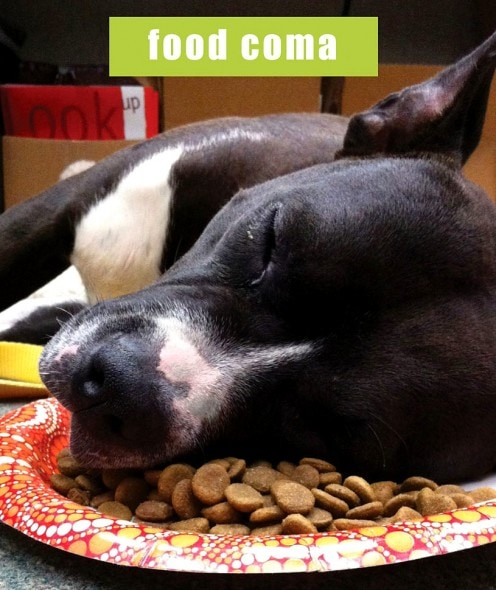 24 Adorable Animals Who Ate Themselves Into A Food Coma