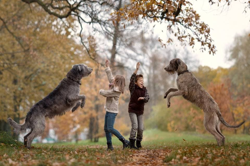11-25-16-little-kids-and-their-big-dogs10