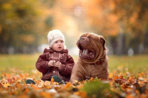 11-25-16-little-kids-and-their-big-dogs13