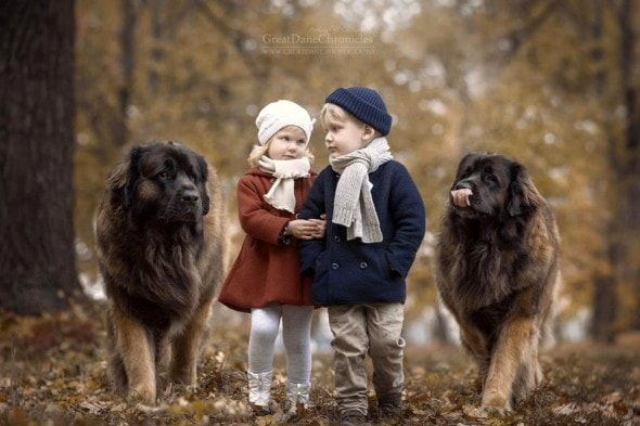 11-25-16-little-kids-and-their-big-dogs19
