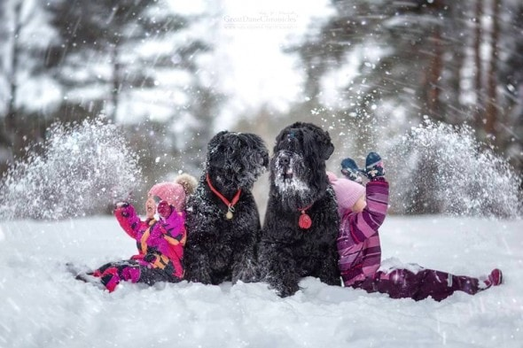 11-25-16-little-kids-and-their-big-dogs21