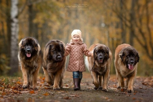 11-25-16-little-kids-and-their-big-dogs28