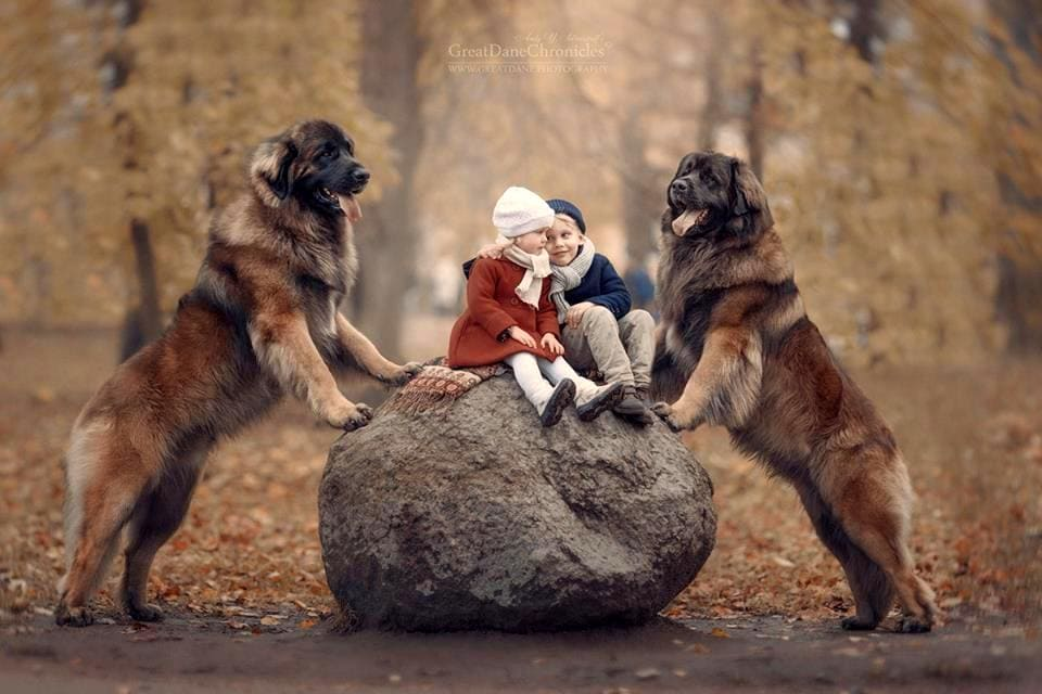Andy Seliverstoff Photos Children Big Dogs