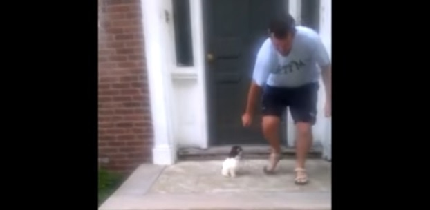 Puppy Gets Creative and Solves the Big Scary Stairs in a Very Different Way