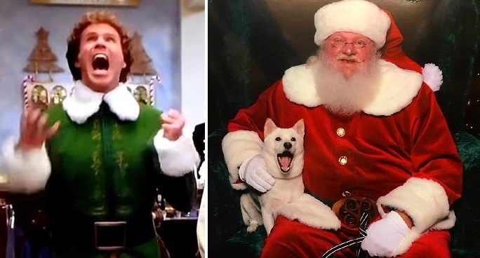 Dog Has The Most Incredible Buddy The Elf Moment When