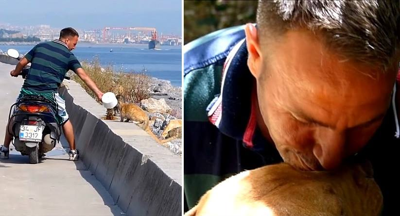 Hero Biker Is Single-Handedly Saving the Street Animals of Istanbul