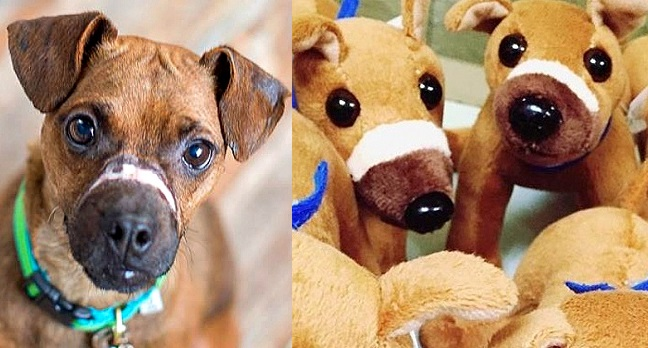 UPDATE:  Abused Dog Gets Special Plush Toy Made in His Image, Scars and All