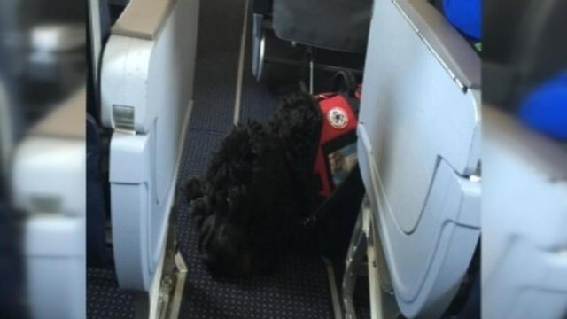 Family Gets Personal, Public Apology from American Airlines After Issue With Service Dog
