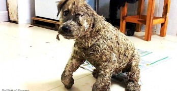 Rotten Children Tried to Drown This Street Puppy in Glue, But He Was Saved Just in Time