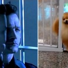 Proof That Pomeranians Are Actually Just Really Adorable T-1000s