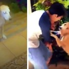Homeless Dog Wanders Up to a House and Chooses a Family to Love Her
