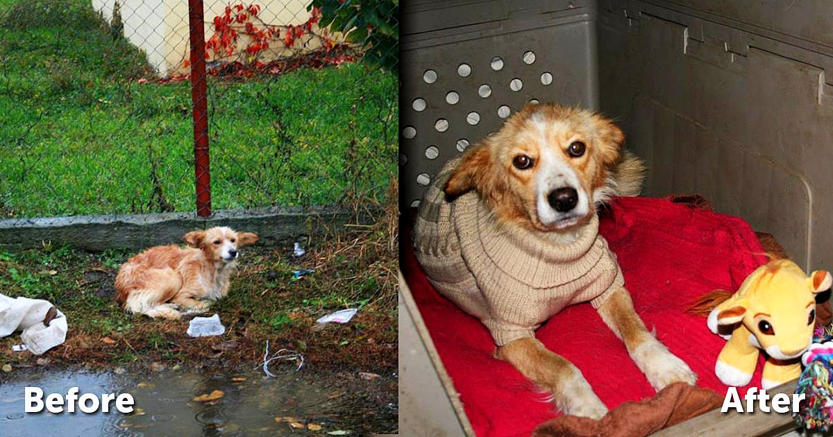 Dog Abandoned in the Pouring Rain Just Needed a Sweater and Some Love
