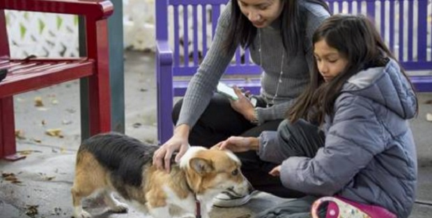California Animal Shelter Waives Adoption Fees and Sees 340 Adoptions in Five Days