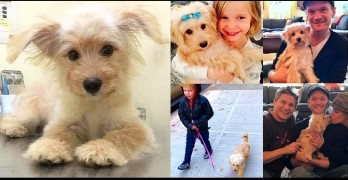 Neil Patrick Harris' Family Has Adopted a Street Dog from Thailand