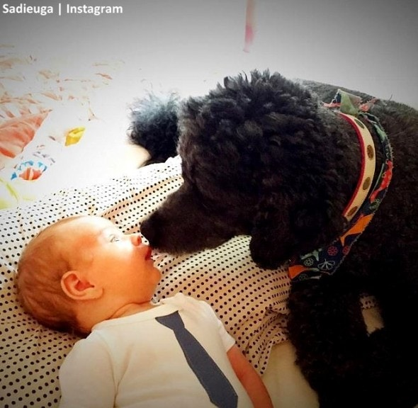 11-8-16-paraplegic-senior-dog-adopts-his-familys-baby-teaches-him-to-crawl3