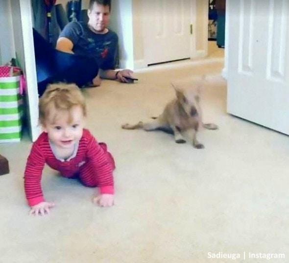11-8-16-paraplegic-senior-dog-adopts-his-familys-baby-teaches-him-to-crawl6