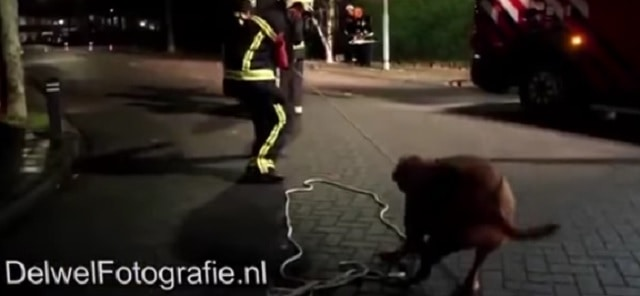 Some Firefighters Get a Helping Hand from a Random Dog