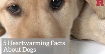 Get Your Morning Started With Five Quick Dog Facts